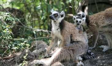Madagascar with Travis Steffens | Calgary Adventure Travel & Luxury Tours