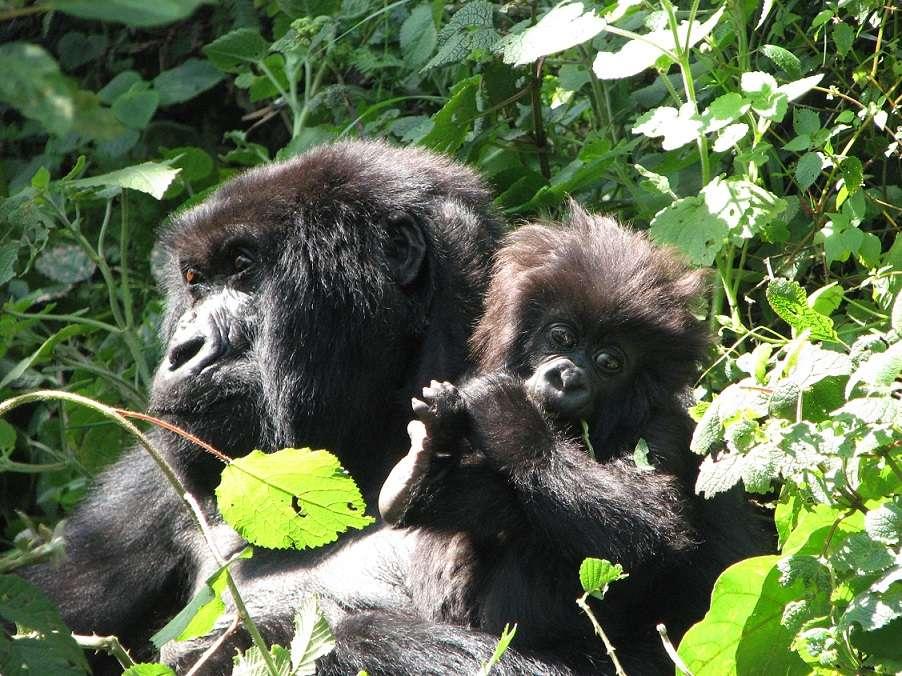 Kenya Safari & Gorillas with Brian Keating | Calgary Adventure Travel & Luxury Tours