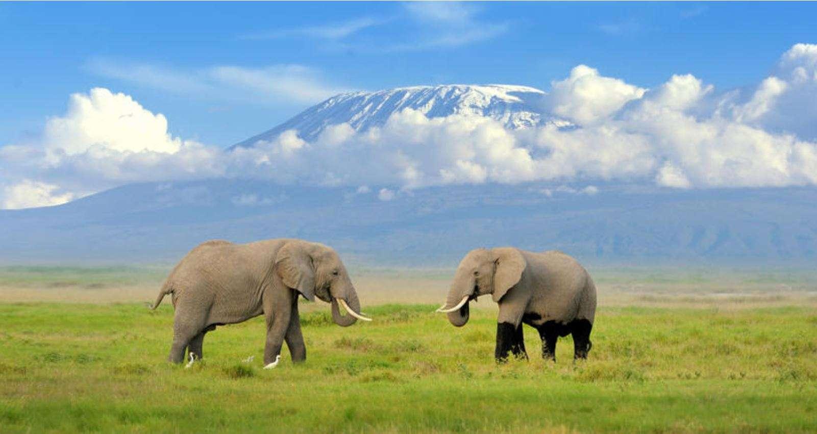 Kilimanjaro, Safari & Zanzibar | Calgary Adventure Travel & Luxury Tours