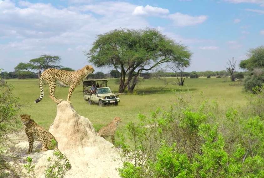 Ultimate Zimbabwe | Calgary Adventure Travel & Luxury Tours
