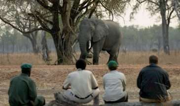 Zambian Bushcamp Adventure | Calgary Adventure Travel & Luxury Tours