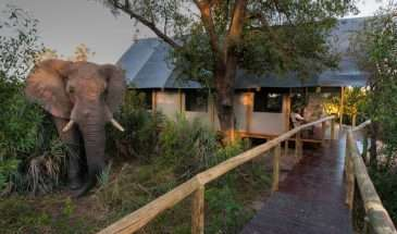 Botswana – More Inspiration | Calgary Adventure Travel & Luxury Tours