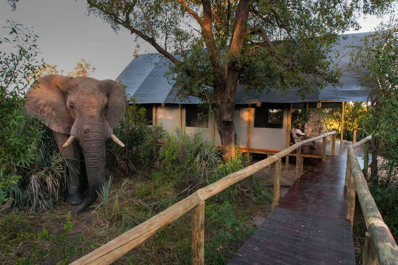 Botswana – More Inspiration | Calgary Adventure Travel & Luxury Tours