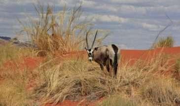Namibia – More Inspiration | Calgary Adventure Travel & Luxury Tours
