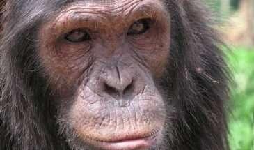 Best of Uganda : Gorillas, Chimps & Game | Calgary Adventure Travel & Luxury Tours