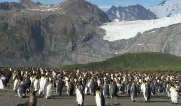 Antarctica Cruising | Calgary Adventure Travel & Luxury Tours