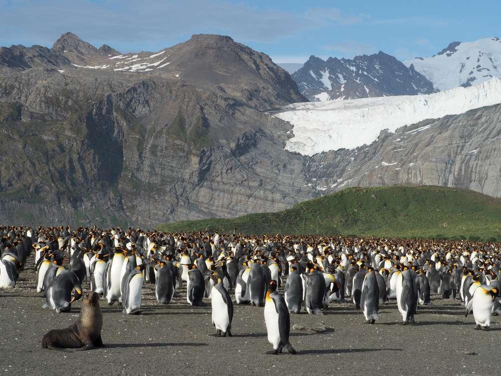 Antarctica Cruising   Calgary Adventure Travel & Luxury Tours