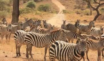 Essence of Tanzania | Calgary Adventure Travel & Luxury Tours