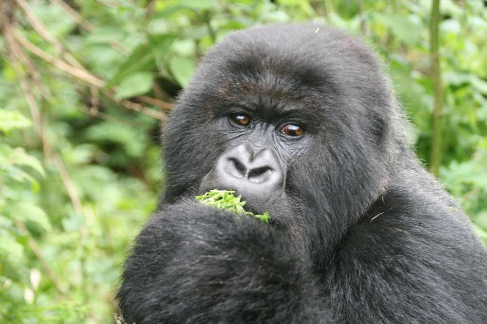 Rwanda - Gorilla Tracking | Calgary Adventure Travel & Luxury Tours