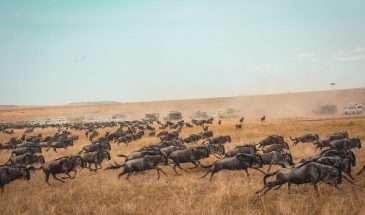 Tanzania – More Inspiration | Calgary Adventure Travel & Luxury Tours