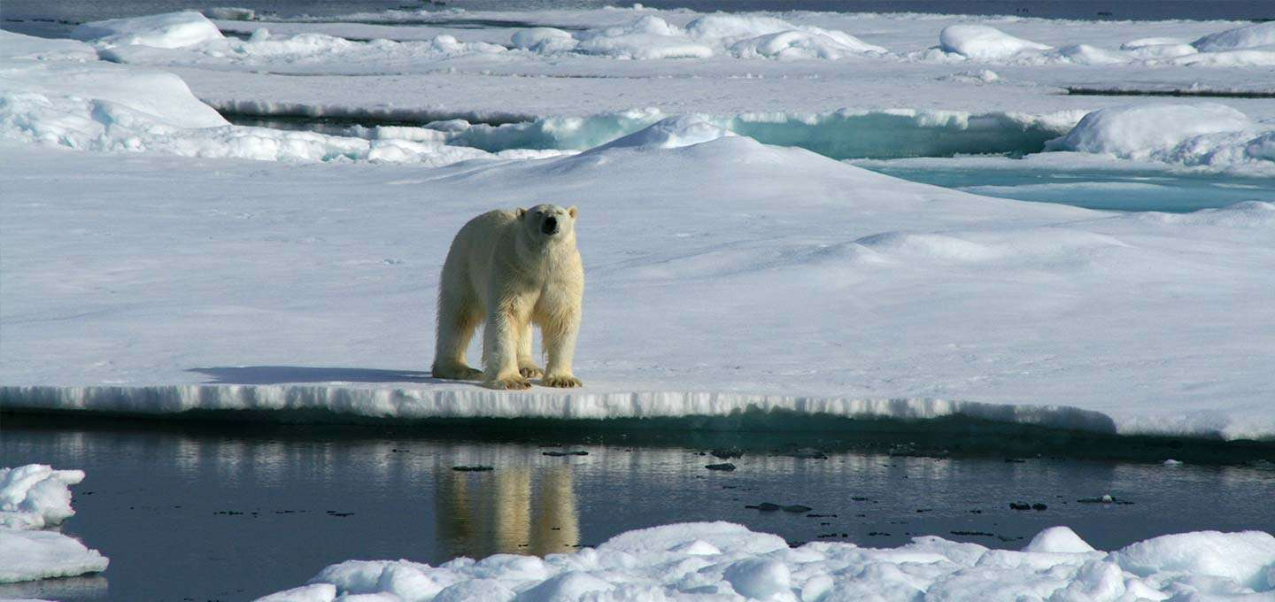 Arctic | Calgary Adventure Travel & Luxury Tours