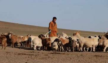 Mongolia Highlights | Calgary Adventure Travel & Luxury Tours
