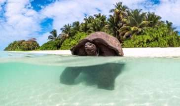 Luxury Seychelles | Calgary Adventure Travel & Luxury Tours