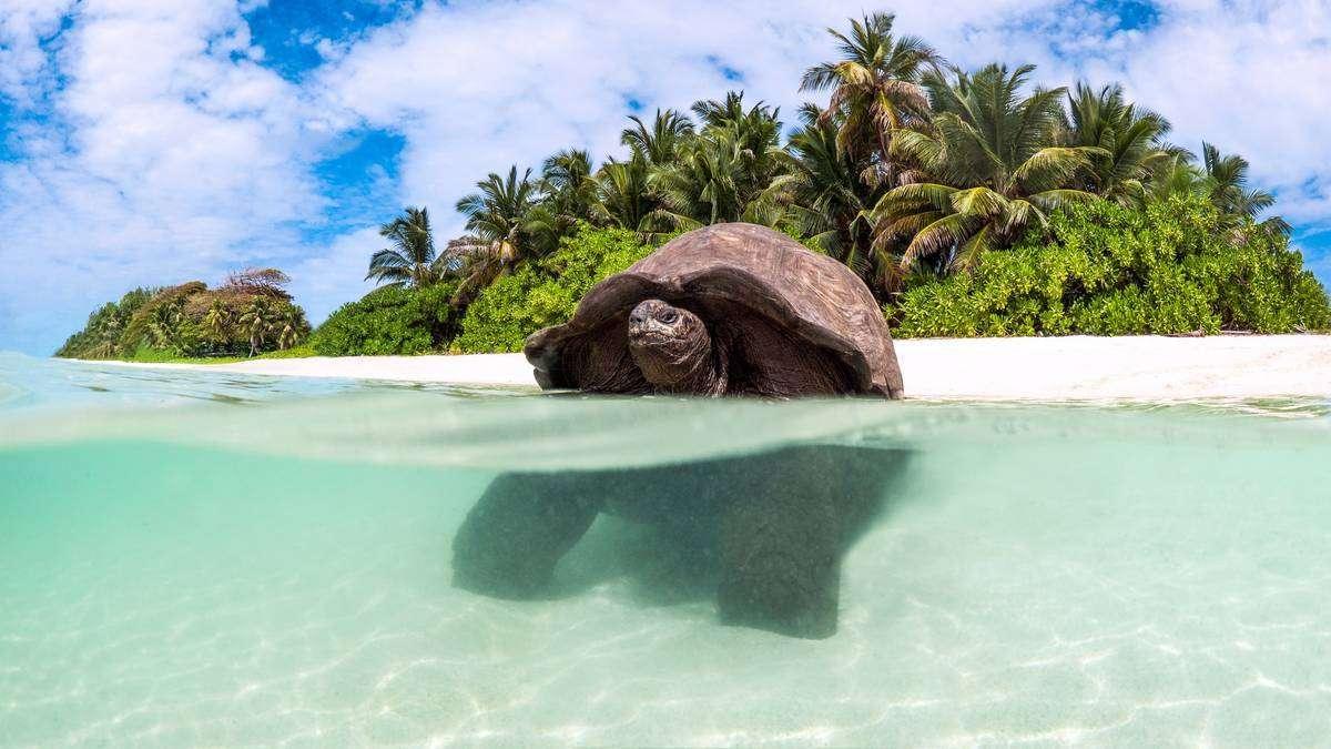 Luxury Seychelles | Calgary Adventure Travel & Luxury Tours