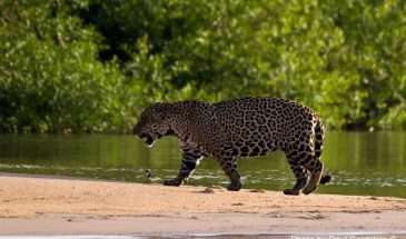 Brazil - Pantanal and Green Coast | Calgary Adventure Travel & Luxury Tours