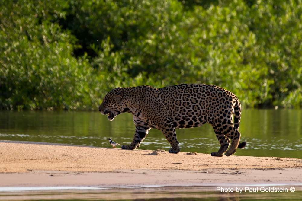 Brazil - Pantanal and Green Coast | Calgary Adventure Travel & Luxury Tours