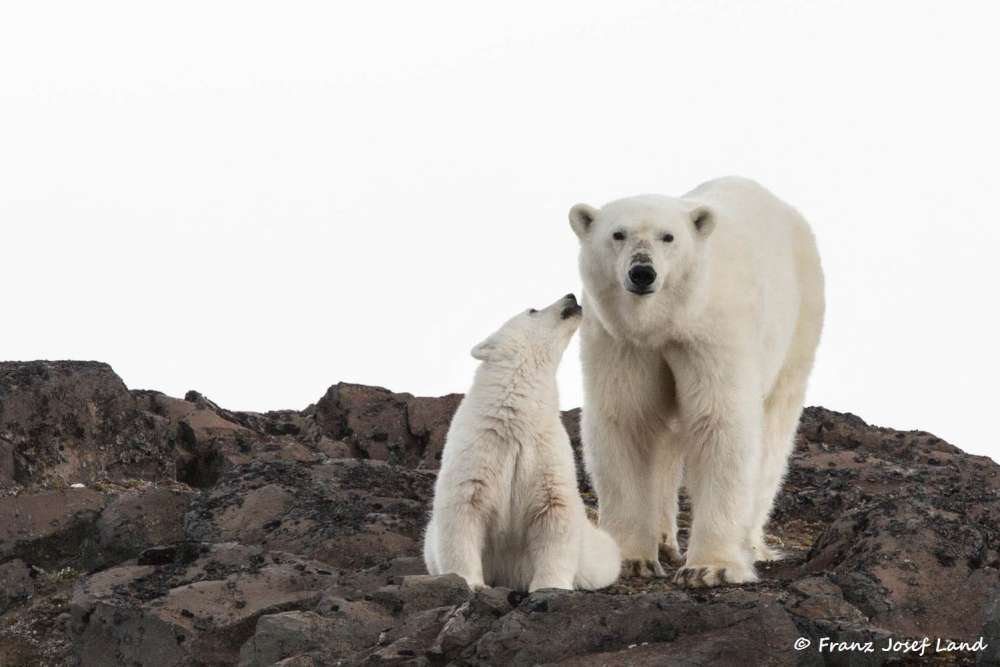 Canada's Remote Arctic Expedition with Denell Falk | Calgary Adventure Travel & Luxury Tours