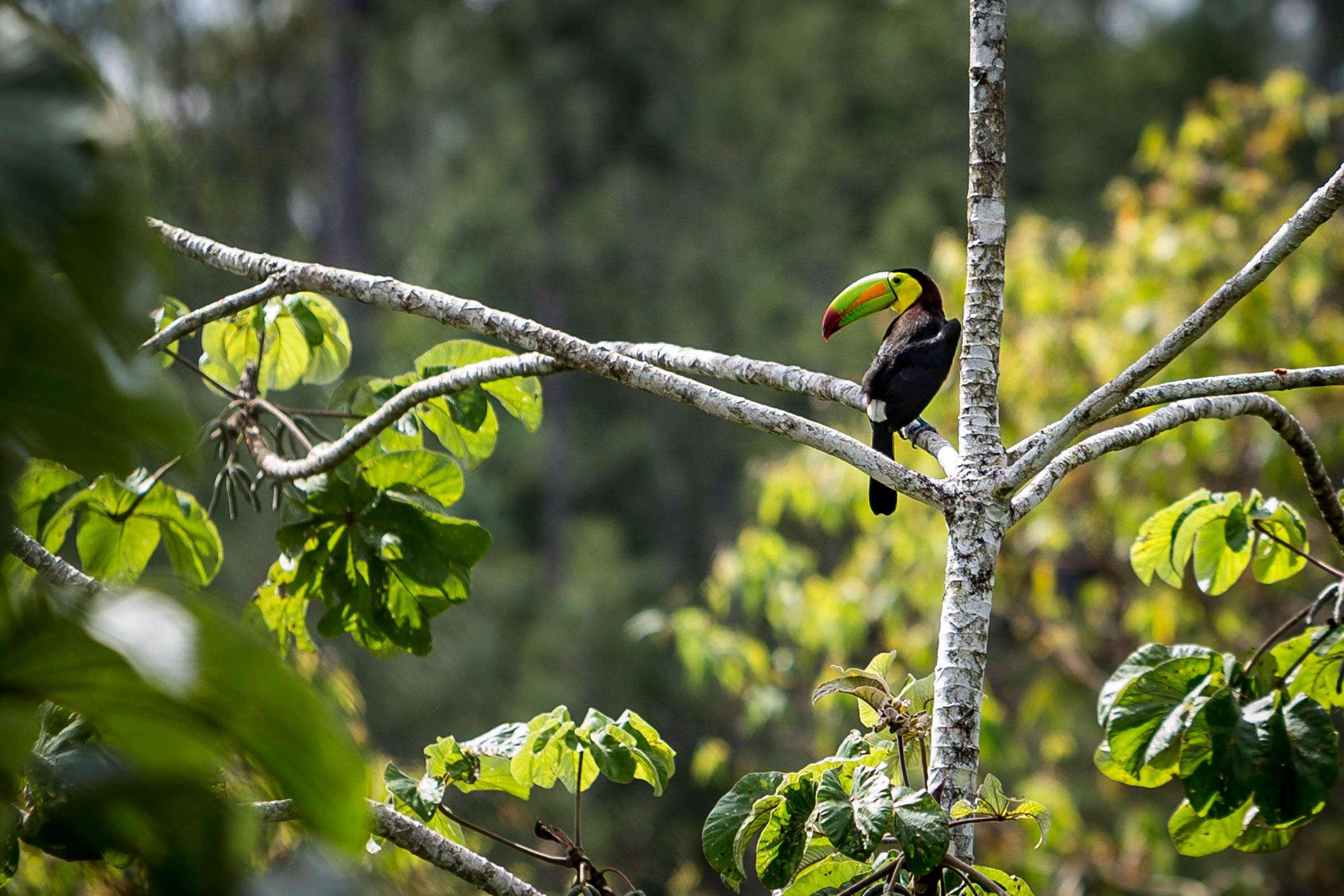 Belize - Wildlife Adventure | Calgary Adventure Travel & Luxury Tours