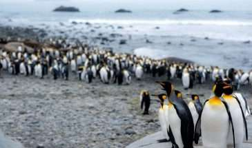 Falkland Islands & South Georgia Expedition | Calgary Adventure Travel & Luxury Tours