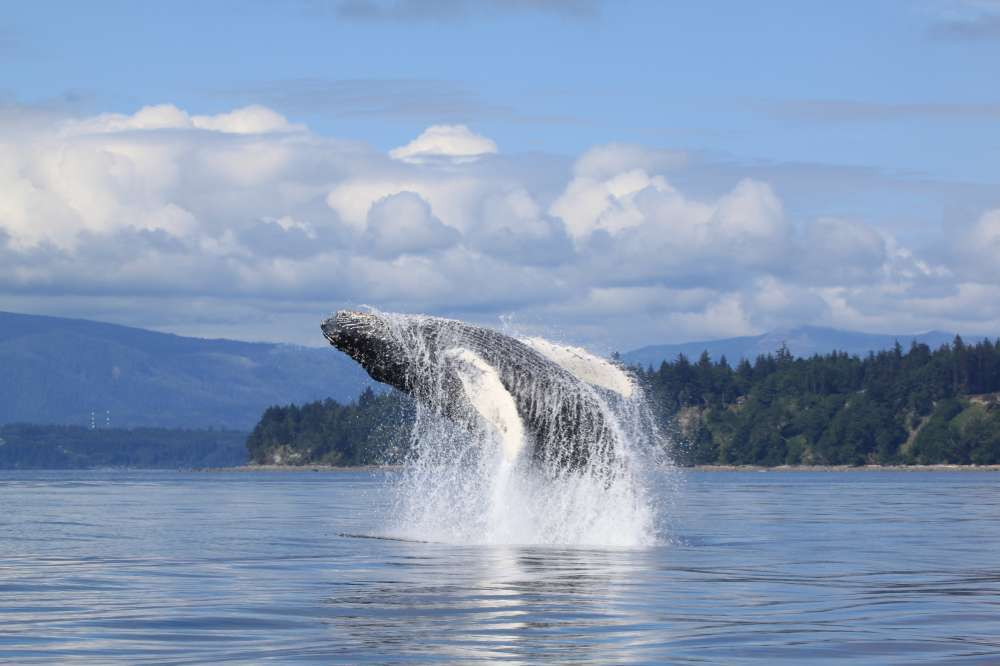 Bears & Whales in the Great Bear Rainforest | Calgary Adventure Travel & Luxury Tours