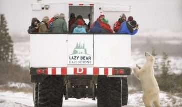 Ultimate Polar Bear Adventure | Calgary Adventure Travel & Luxury Tours