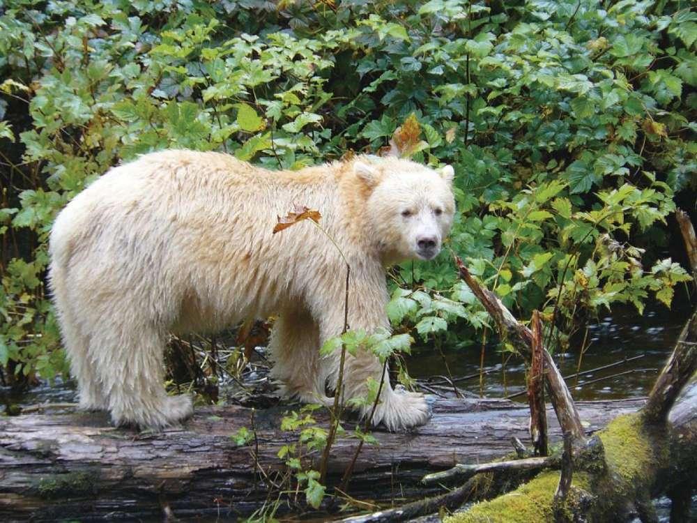 Sailing Great Bear Rainforest | Calgary Adventure Travel & Luxury Tours