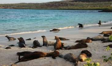 Ecuador & Galapagos with Brian Keating | Calgary Adventure Travel & Luxury Tours