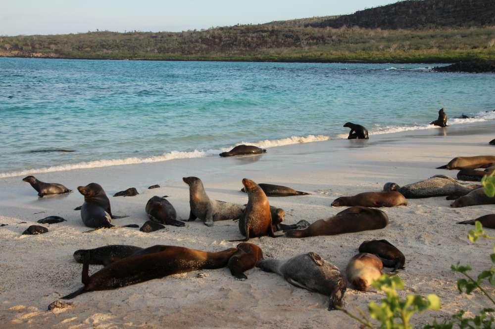 Ecuador & Galapagos with Brian Keating | Calgary Adventure Travel & Luxury Tours