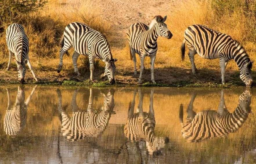 Luxury South Africa - Safari to Winelands | Calgary Adventure Travel & Luxury Tours