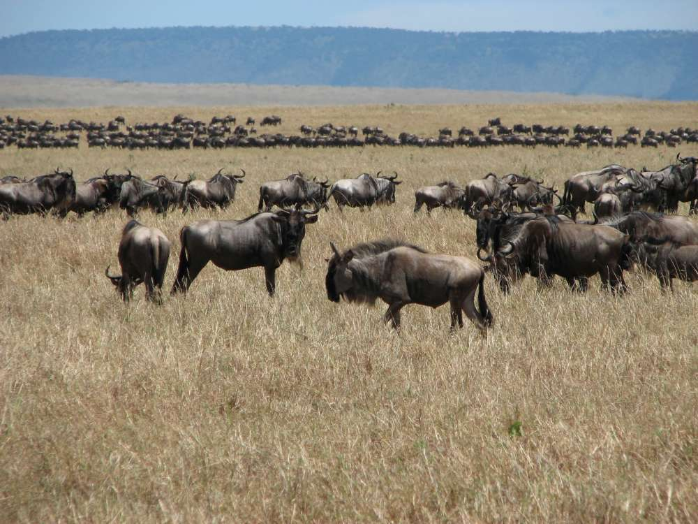 Kenya - Follow the Great Migration Safari | Calgary Adventure Travel & Luxury Tours